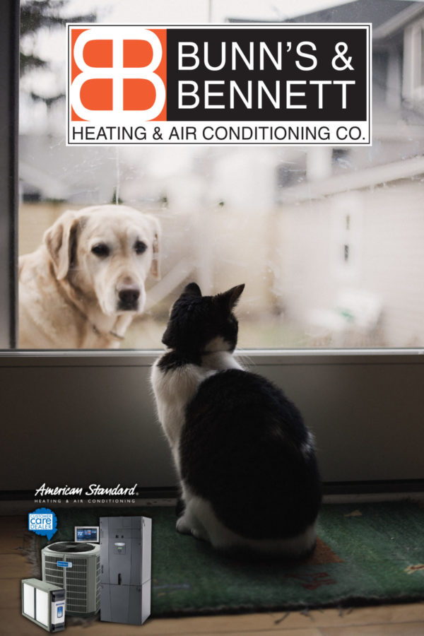 How A Pet Can Impact Your Home's HVAC System